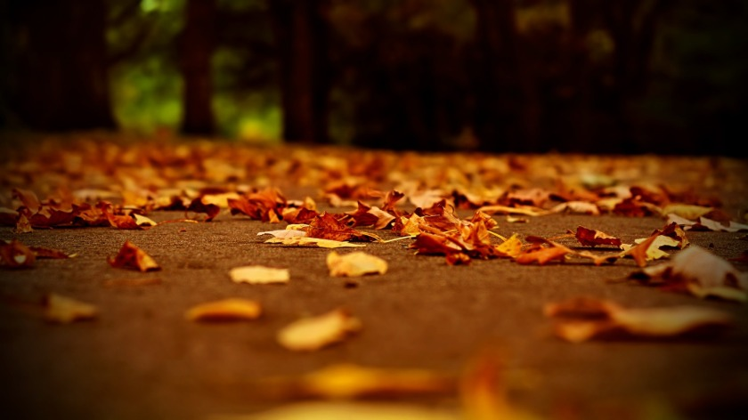 fall-wallpaper-backgrounds-hd